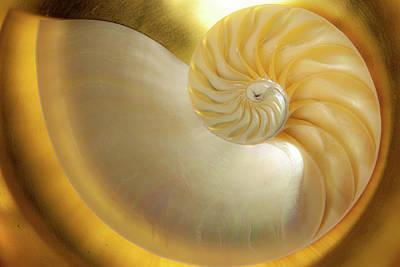 Photograph - Golden_nautilus_0692 by Mark Shoolery