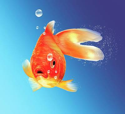 Digital Art - Goldfish, Artwork by Leonello Calvetti