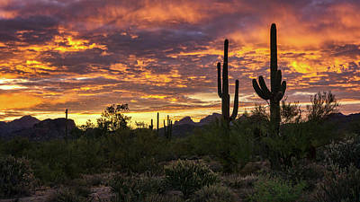 Photograph - Good Morning Arizona Style  by Saija Lehtonen