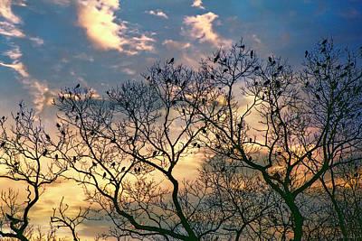 Photograph - Good Morning by John Rivera