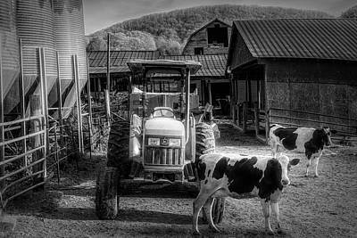 Photograph - Good Morning Sunshine In Black And White by Debra and Dave Vanderlaan