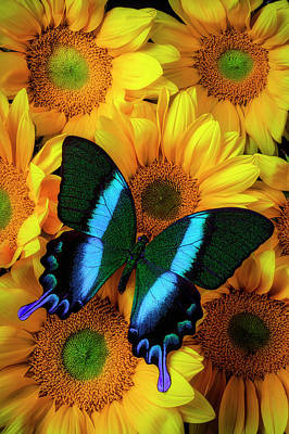 Photograph - Gorgeous Blue Green Butterfly by Garry Gay