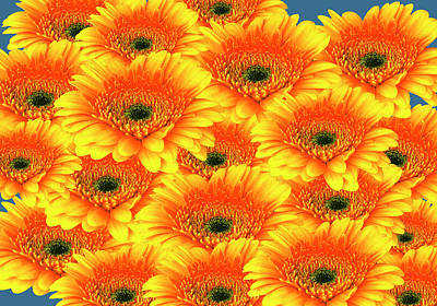 Photograph - Gorgeous Yellow Orange Gerberas by Johanna Hurmerinta