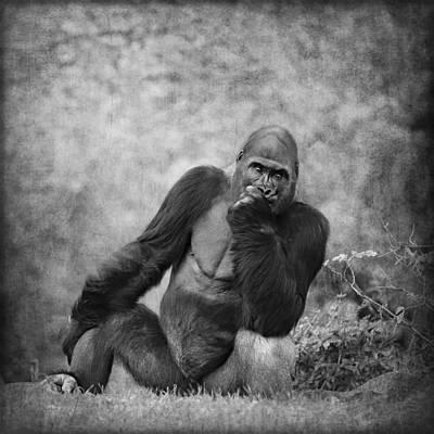 Portrait Study Mixed Media - Gorilla 1 by Heike Hultsch