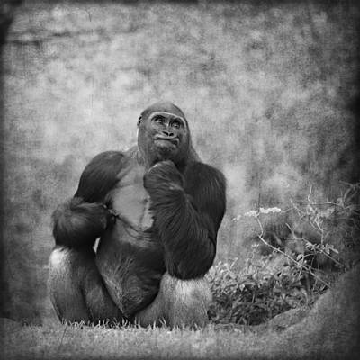 Portrait Study Mixed Media - Gorilla 10 by Heike Hultsch