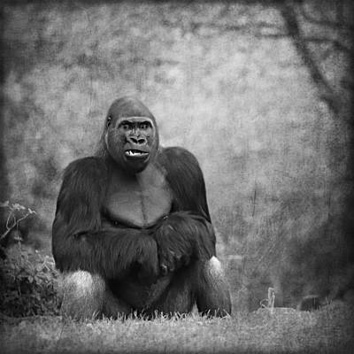 Portrait Study Mixed Media - Gorilla 11 by Heike Hultsch