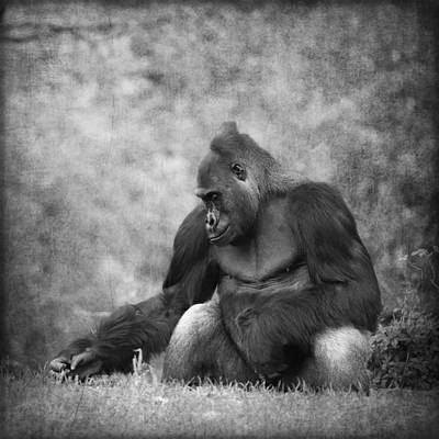 Portrait Study Mixed Media - Gorilla 12 by Heike Hultsch