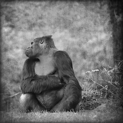 Portrait Study Mixed Media - Gorilla 15 by Heike Hultsch