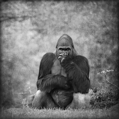 Portrait Study Mixed Media - Gorilla 16 by Heike Hultsch