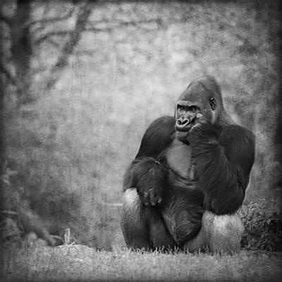 Portrait Study Mixed Media - Gorilla 2 by Heike Hultsch
