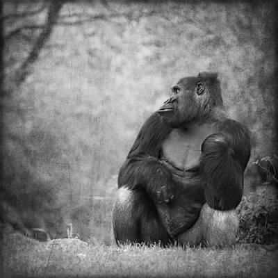 Portrait Study Mixed Media - Gorilla 4 by Heike Hultsch