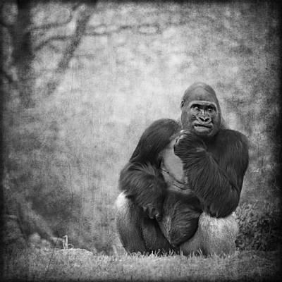 Portrait Study Mixed Media - Gorilla 5 by Heike Hultsch