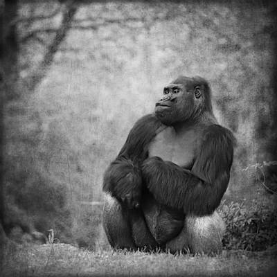 Portrait Study Mixed Media - Gorilla 7 by Heike Hultsch