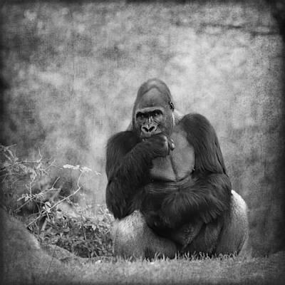 Portrait Study Mixed Media - Gorilla 8 by Heike Hultsch