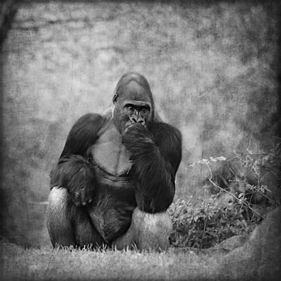 Portrait Study Mixed Media - Gorilla by Heike Hultsch