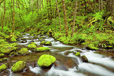 Photograph - Gorton Creek Through Lush Rainforest by Sara winter