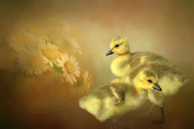 Baby Geese Wall Art - Photograph - Goslings And Daisies by Donna Kennedy