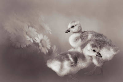 Baby Geese Wall Art - Photograph - Goslings And Daisies - Sepia by Donna Kennedy