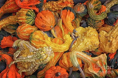 Photograph - Gourds Of Autumn by Karen Adams