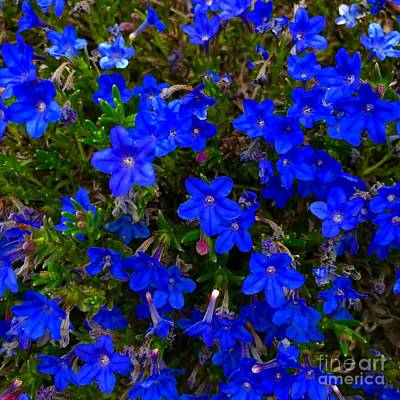 Photograph - Grace In Blue by Suzanne Lorenz