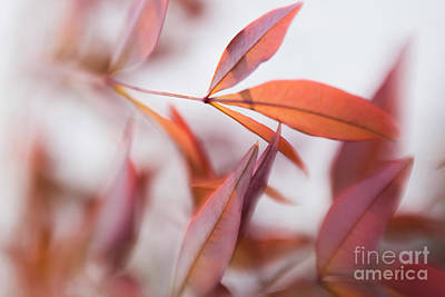 Photograph - Grace In Motion by Mary Lou Chmura