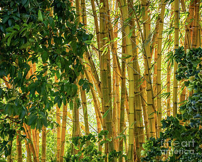 Photograph - Graceful Bamboo by Sabrina L Ryan