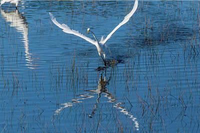 Photograph - Graceful Bird Flying In by Dan Friend