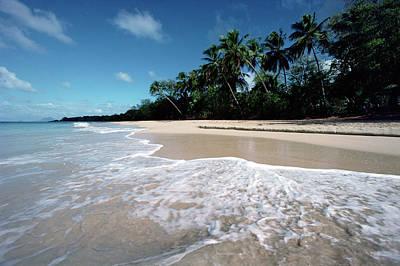 Photograph - Grand Anse Des Salines, Martinique by Gerry Ellis/ Minden Pictures
