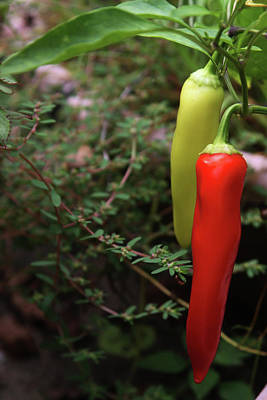 Photograph - Grandmas Red Peppers by Vadim Levin