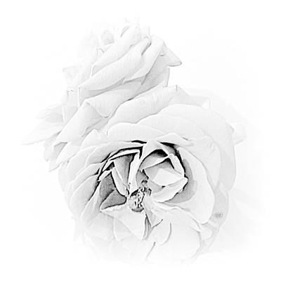 Photograph - Grandmas Roses - B  -  W by VIVA Anderson
