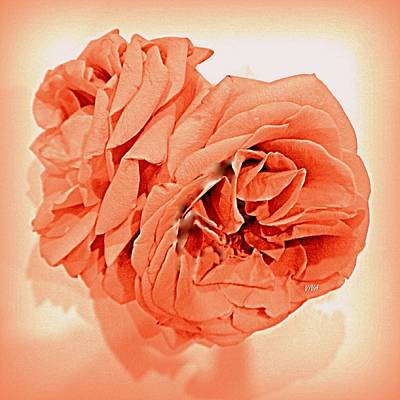 Photograph - Grandmas Roses - Living Coral by VIVA Anderson