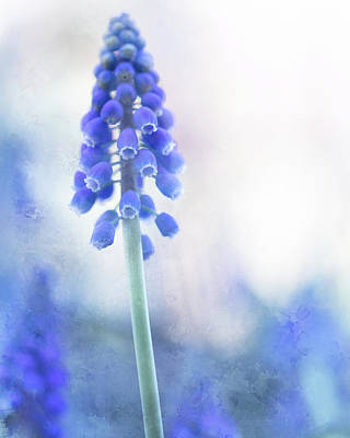 Claude Monet - Grape Hyacinth 2 by Rebecca Cozart