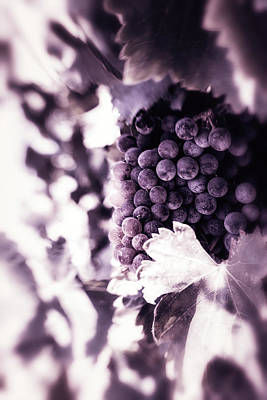 Photograph - Grapes Into Wine by Marnie Patchett