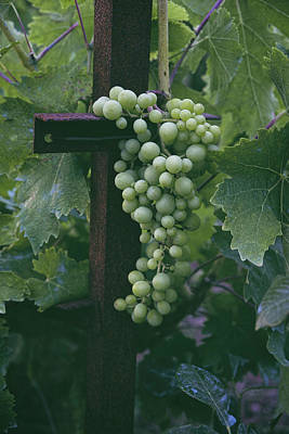 Photograph - Grapes by Lucinda Walter