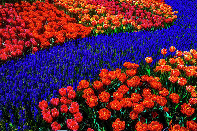 Photograph - Graphic Tulips Spring Garden by Garry Gay