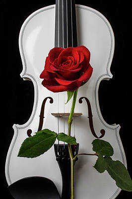 Photograph - Graphic White Violin And Red Rose by Garry Gay
