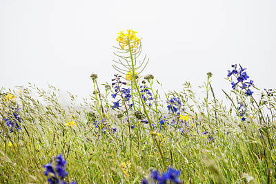 Photograph - Grass And Flowers by Robert Potts