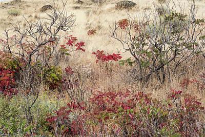 Photograph - Grass And Sumac by Robert Potts