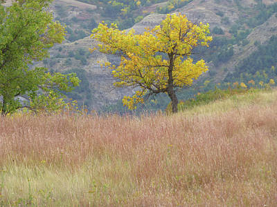 Wall Art - Photograph - Grass And Tree Reverie by Cris Fulton