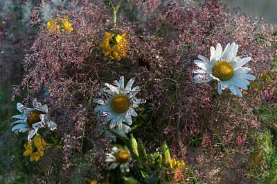 Photograph - Grass, Daisy, Trefoil  by Robert Potts