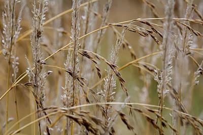 Photograph - Grass Pattern by Robert Potts
