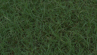 Photograph - Grass by Philip A Swiderski Jr