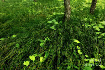 Photograph - Grasses And Vines by Dan Carmichael