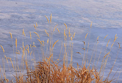 Photograph - Grasses By The Lake by Kae Cheatham