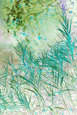 Photograph - Grasses, Provence, France by Jean Gill