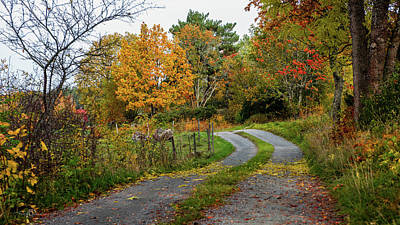 Photograph - Gravelled Road In Autumn by Torbjorn Swenelius