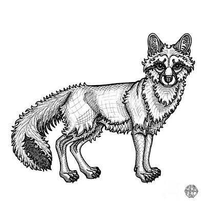 Drawing - Gray Fox by Amy E Fraser