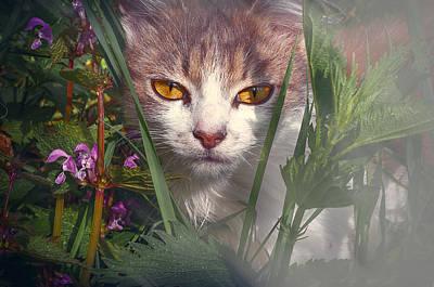 Photograph - Gray kitten in the grass by Valerie Lazareva
