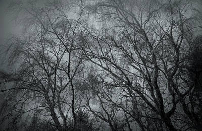 Photograph - Gray Misty Morning by Bill Posner
