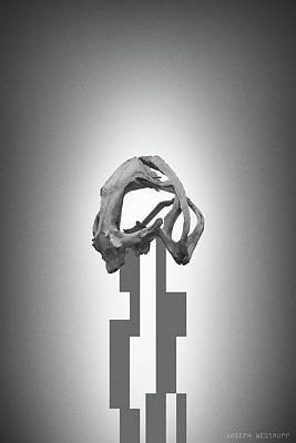 Photograph - Gray Rose - Surreal Abstract Frog Skull by Joseph Westrupp